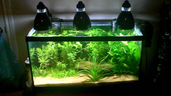 Ultra-violet lamps for plants how to make