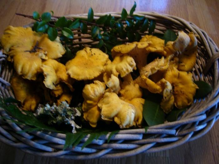 the benefits of mushrooms chanterelles