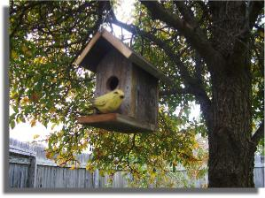 how to properly hang a birdhouse